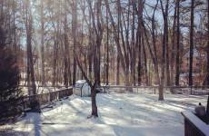 sunny snowy yard